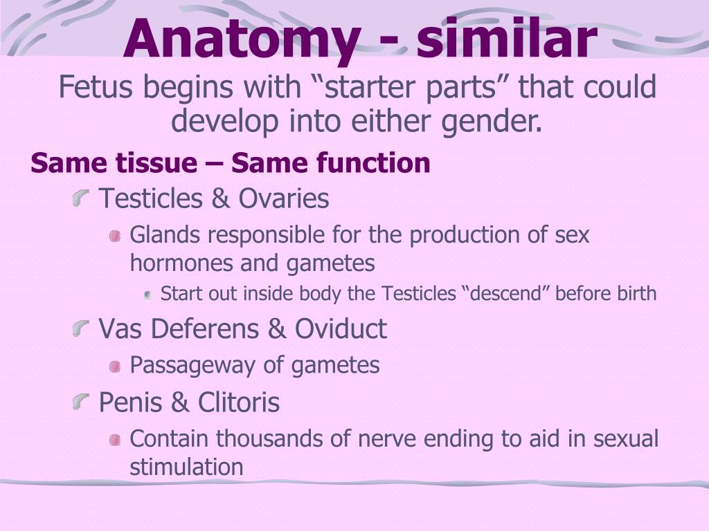 Anatomy - similar
