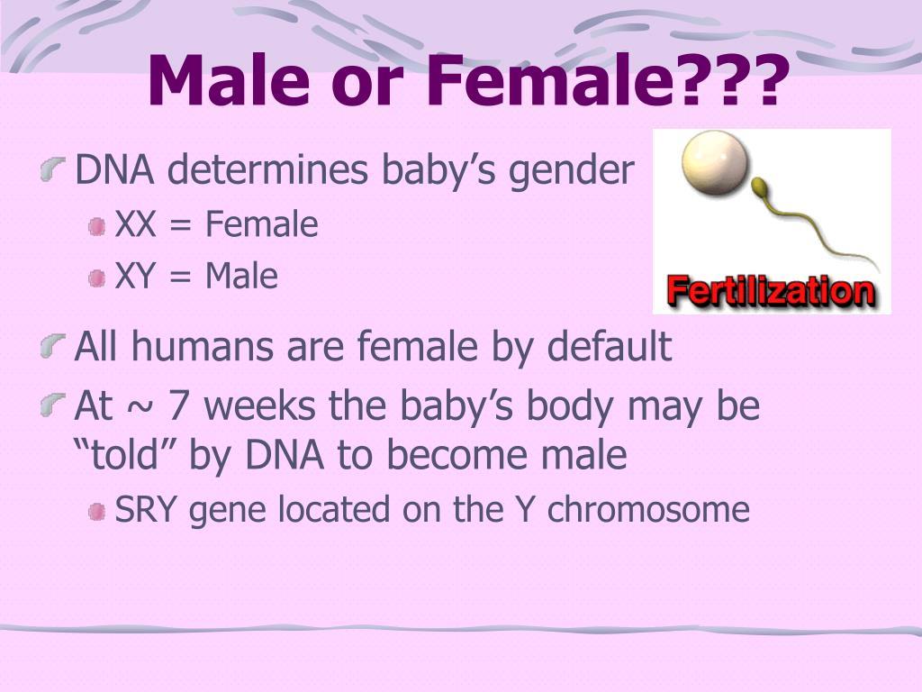 Male or Female???