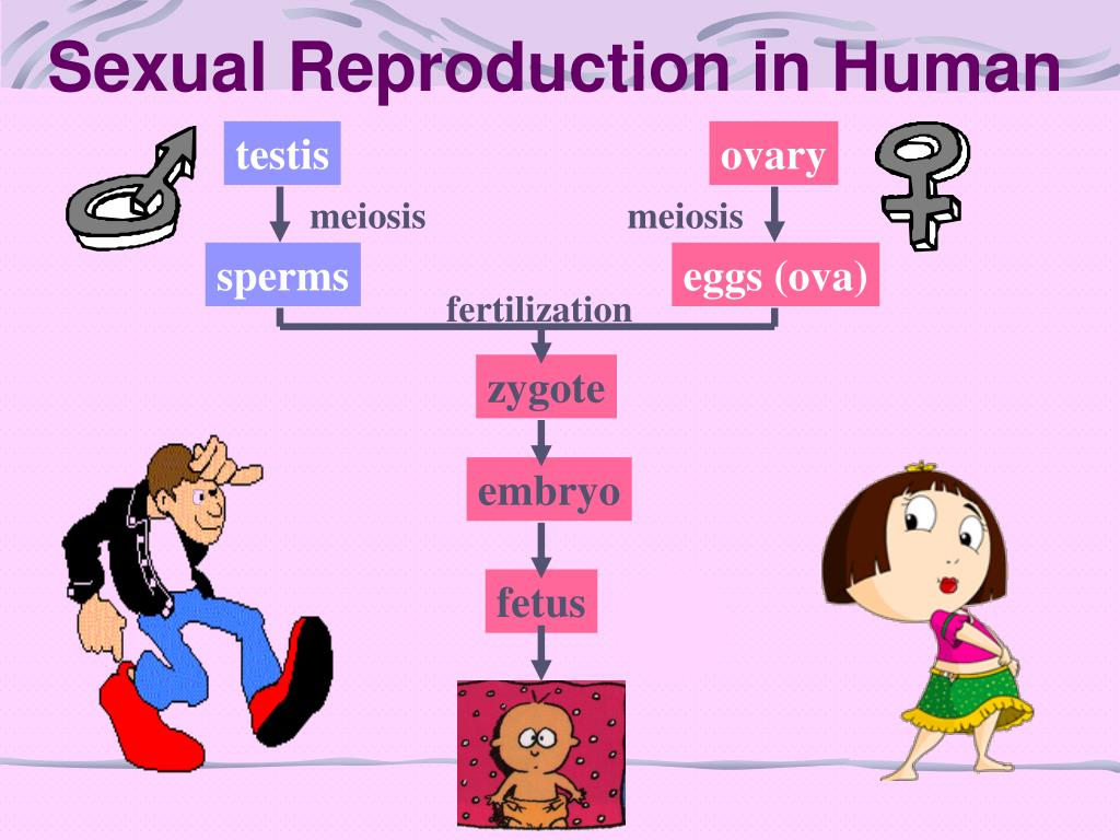 Sexual Reproduction in Human