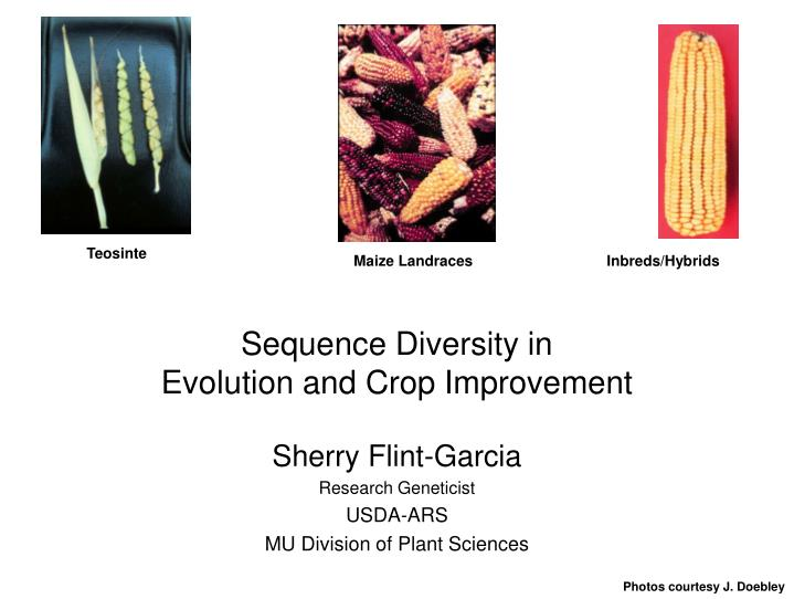 sequence diversity in evolution and crop improvement n.