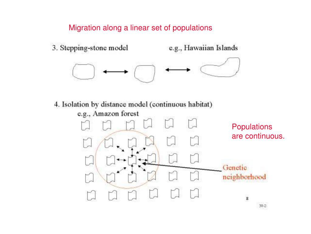 Migration along a linear set of populations