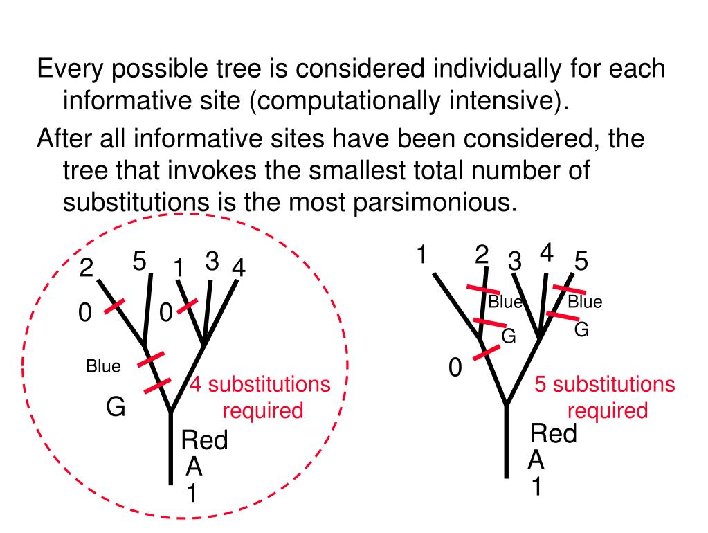 Every possible tree is considered individually for each informative site (computationally intensive).