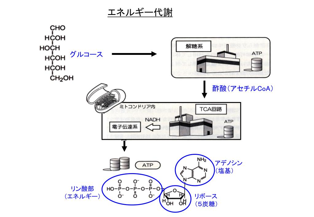 TCA 回路 - PowerPoint PPT Presentation