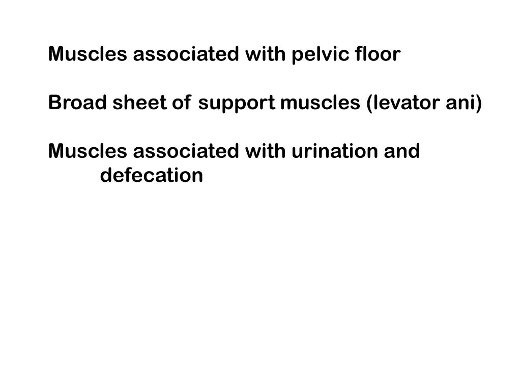 Muscles associated with pelvic floor