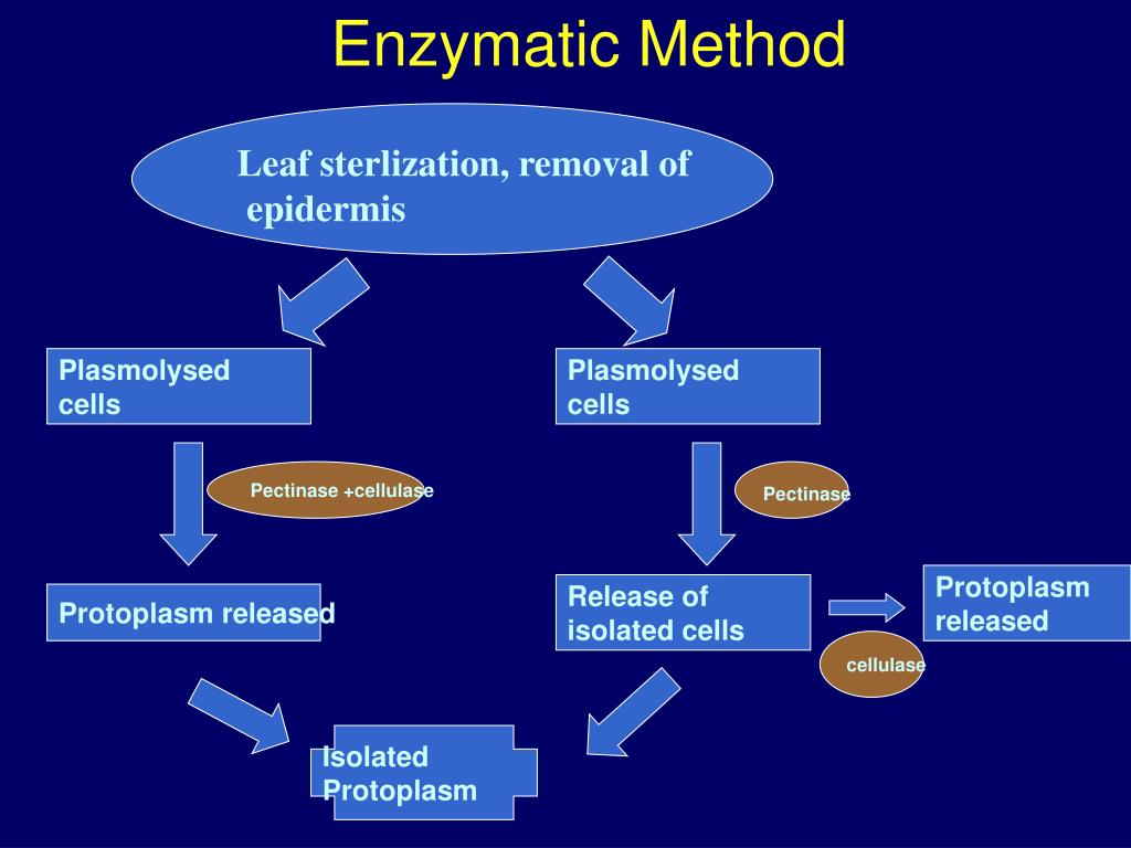 Enzymatic Method