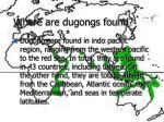 where are dugongs found