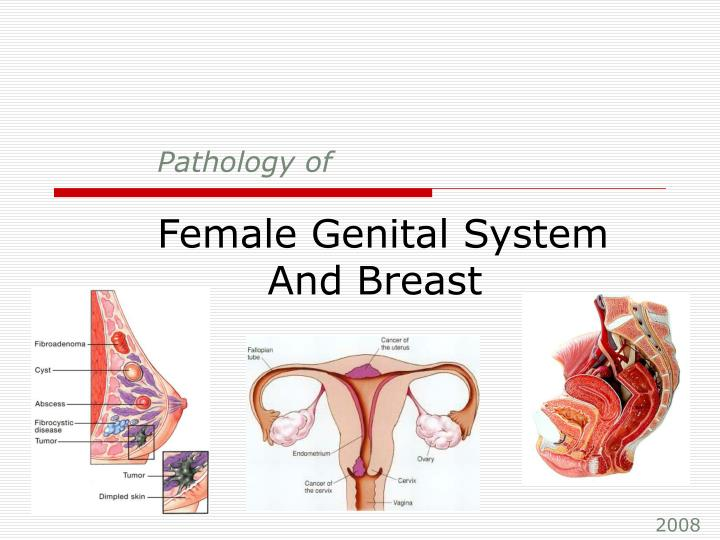 pathology of female genital system and breast n.
