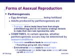 forms of asexual reproduction3
