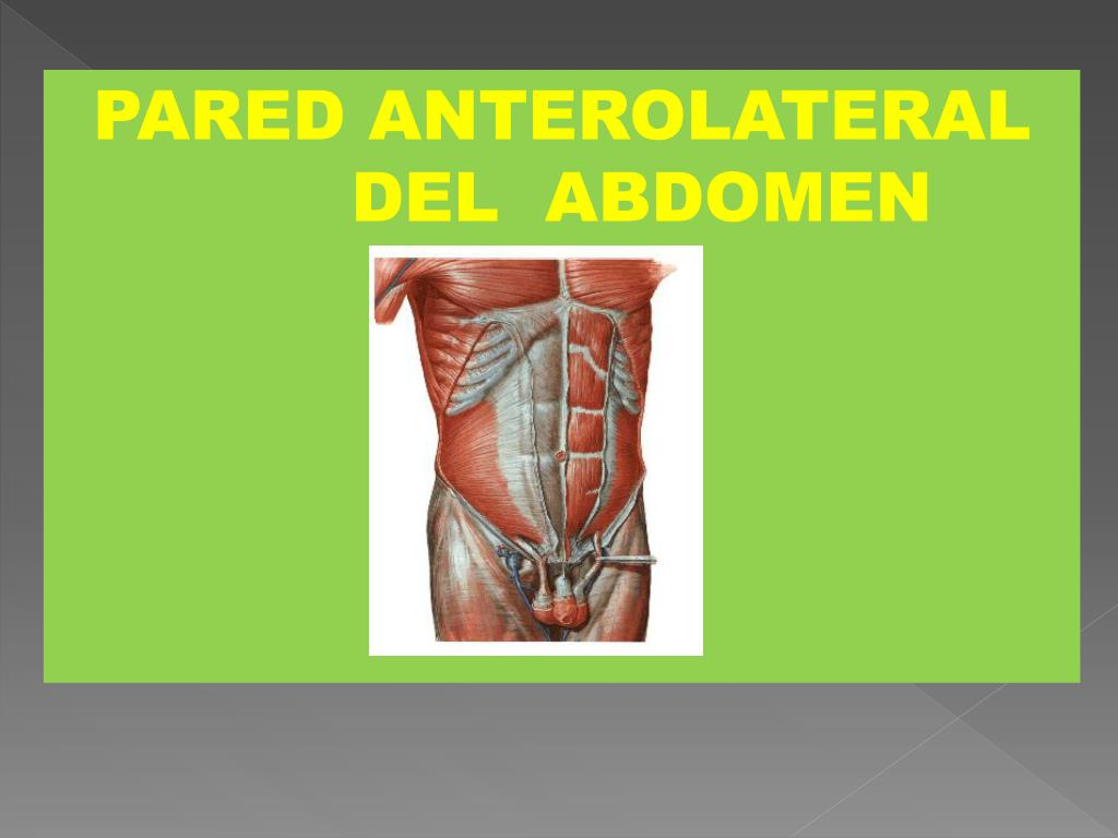 PPT - PARED ANTEROLATERAL DEL ABDOMEN PowerPoint Presentation - ID ...