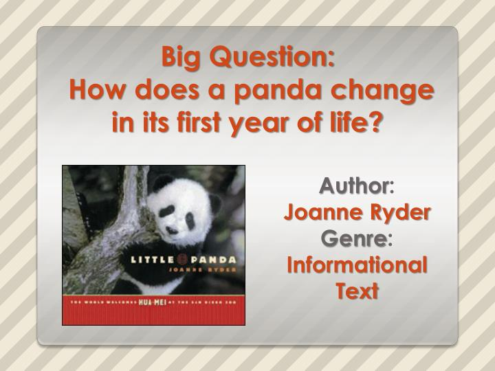 big question how does a panda change in its first year of life n.