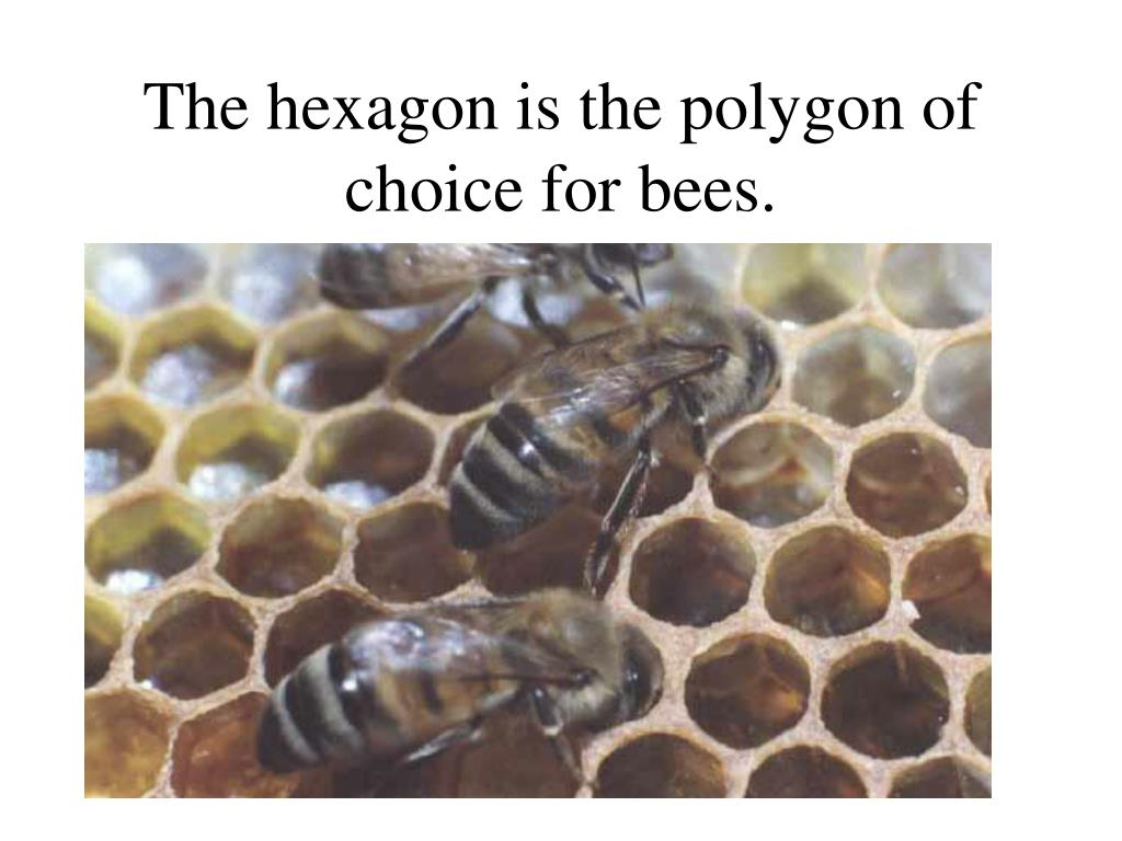 The hexagon is the polygon of choice for bees.