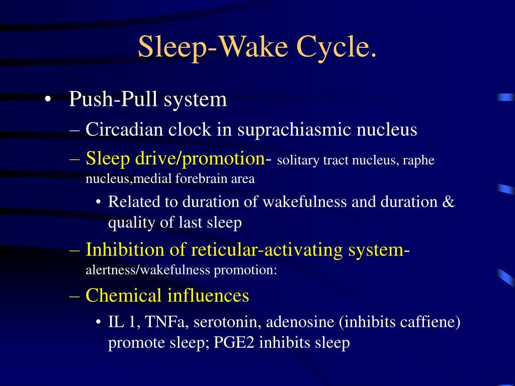 Sleep-Wake Cycle.