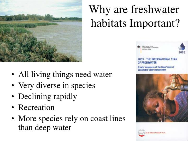 Why are freshwater habitats important
