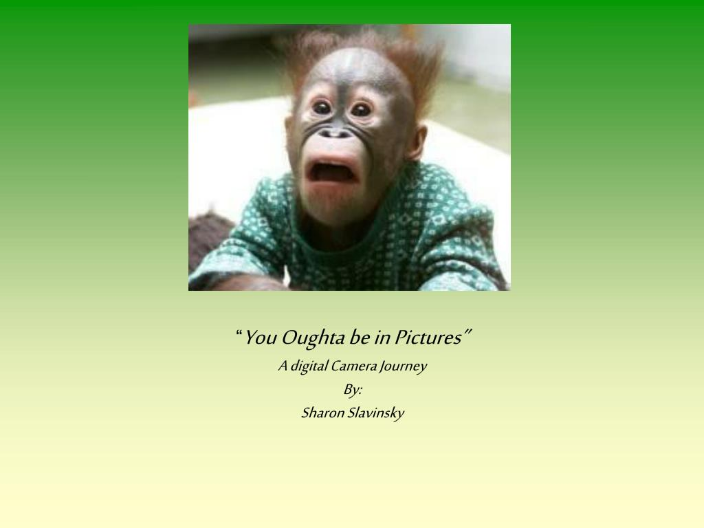 you oughta be in pictures a digital camera journey by sharon slavinsky l.