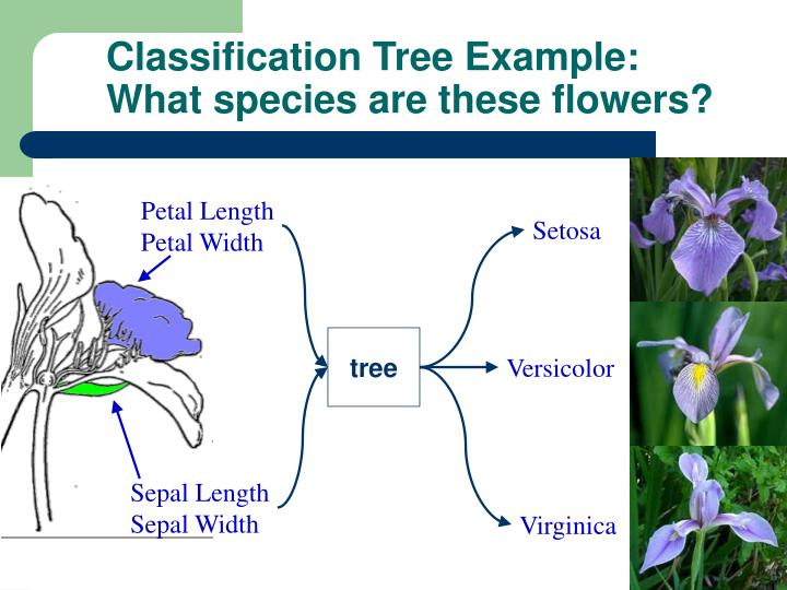 Classification Tree Example: