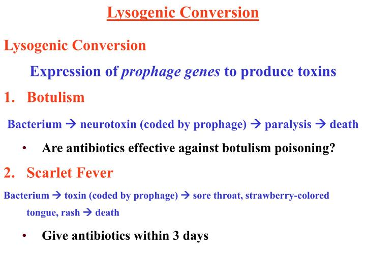 Lysogenic Conversion