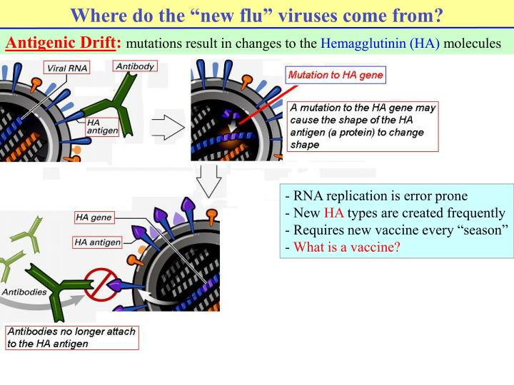 "Where do the ""new flu"" viruses come from?"