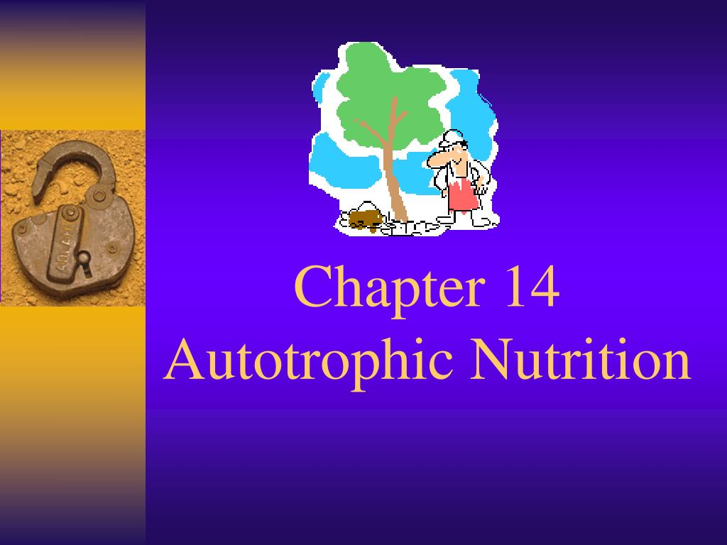 Ppt Chapter 14 Autotrophic Nutrition Powerpoint Presentation Free Download Id 477142