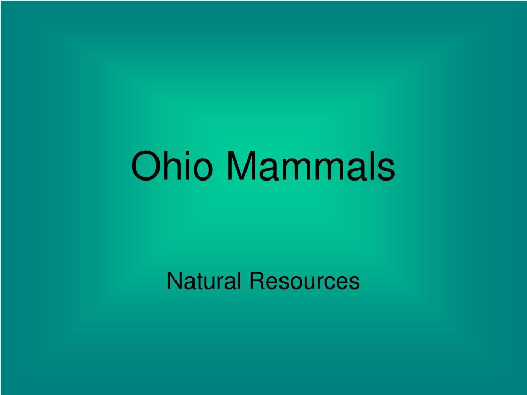 ohio mammals l.