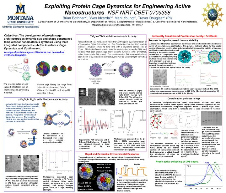 Exploiting Protein Cage Dynamics for Engineering Active Nanostructure