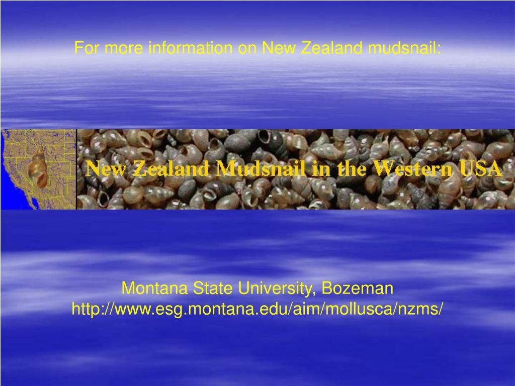 For more information on New Zealand mudsnail: