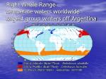 right whale range temperate waters worldwide largest group winters off argentina