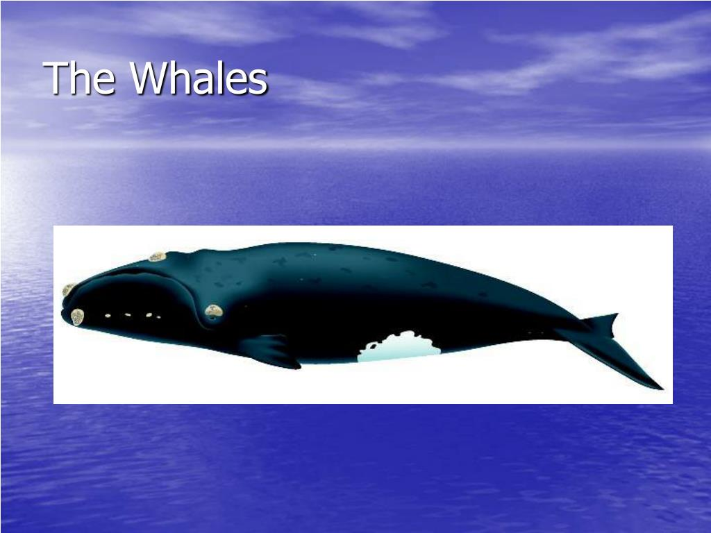 the whales l.