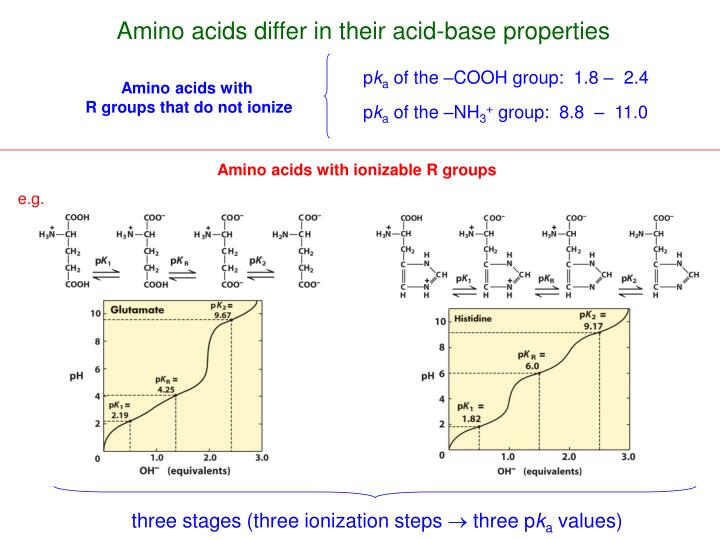 Amino acids differ in their acid-base properties