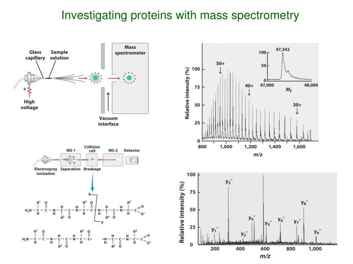 Investigating proteins with mass spectrometry