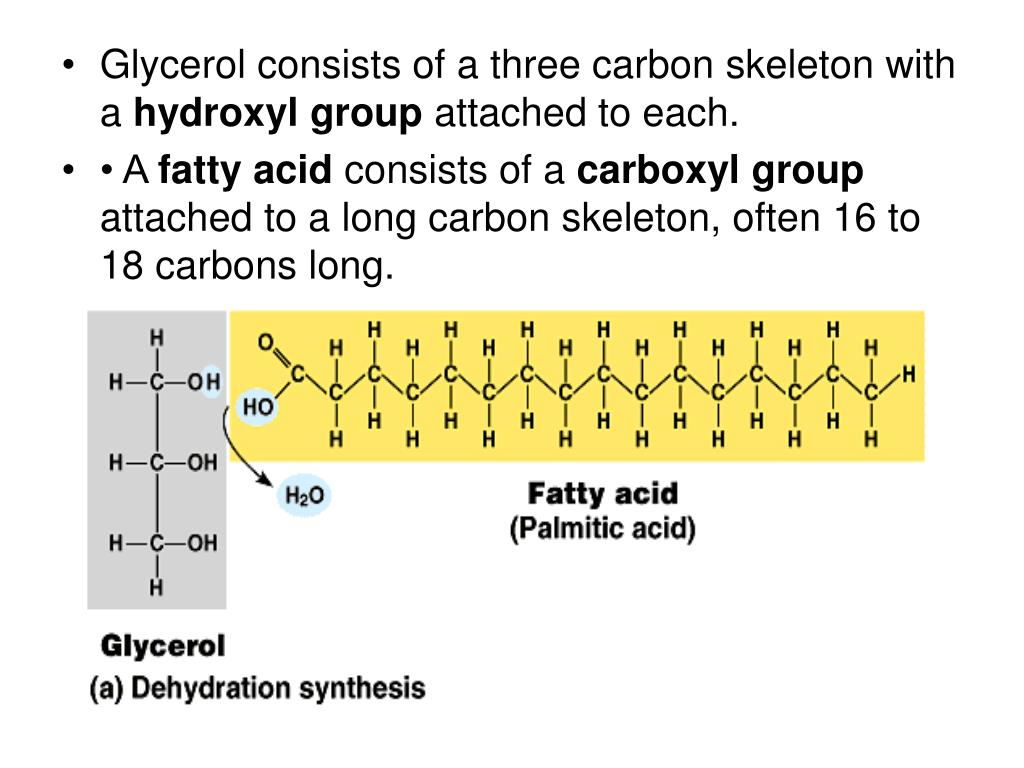 Glycerol consists of a three carbon skeleton with a