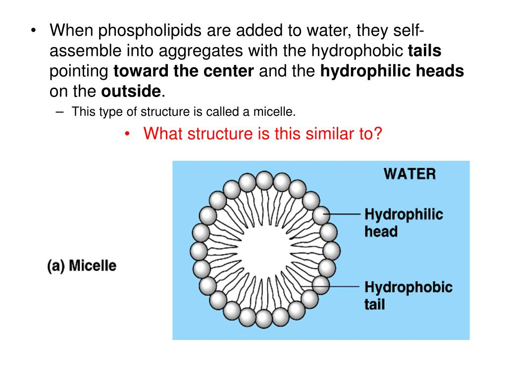 When phospholipids are added to water, they self-assemble into aggregates with the hydrophobic