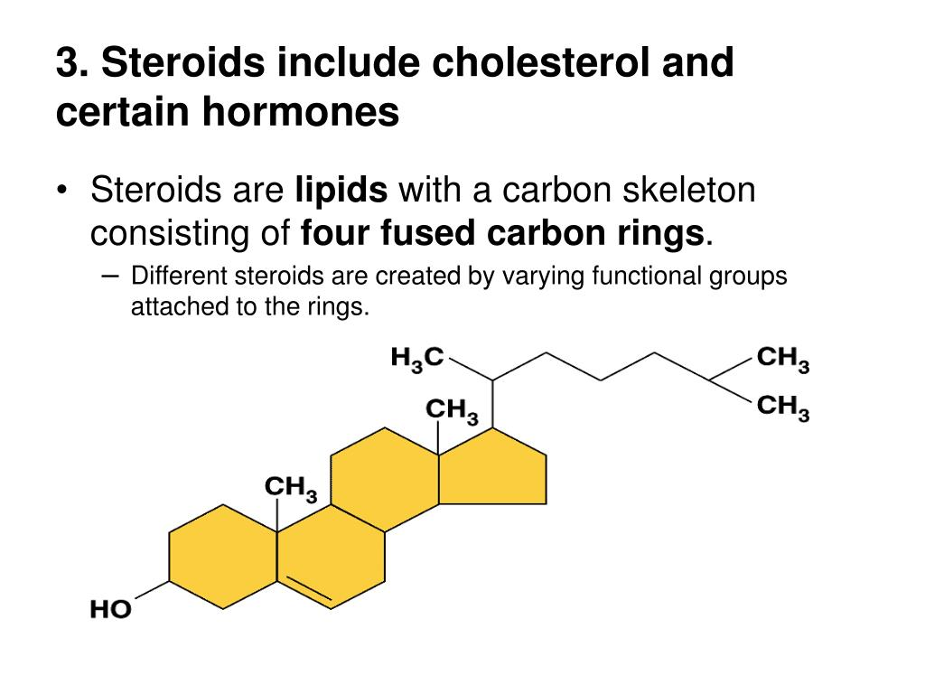 3. Steroids include cholesterol and certain hormones