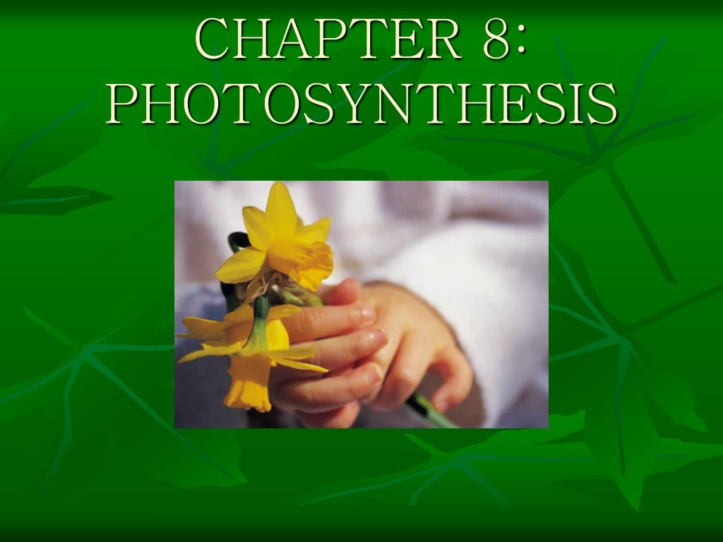 chapter 8 photosynthesis l.