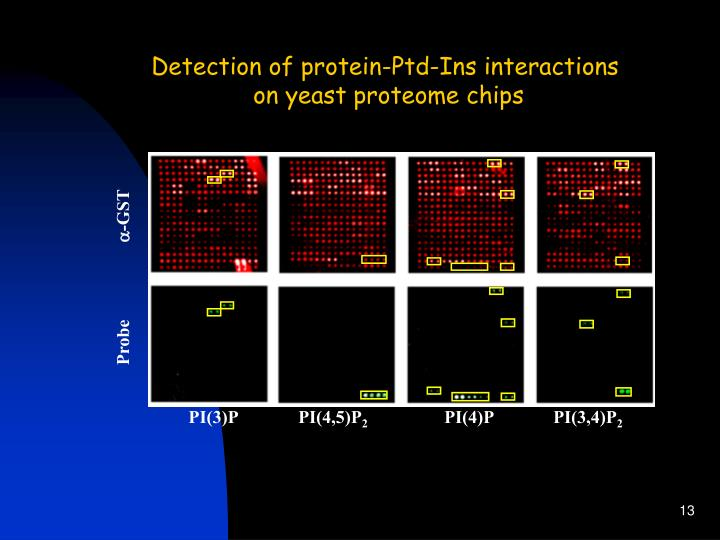 Detection of protein-Ptd-Ins interactions