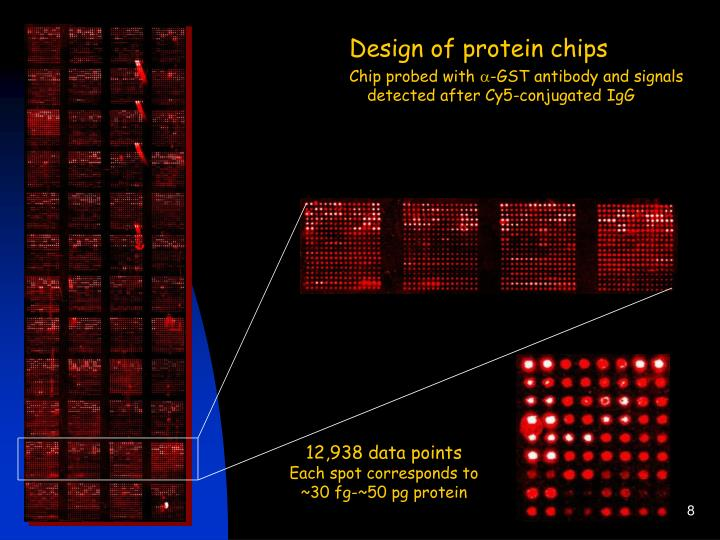 Design of protein chips