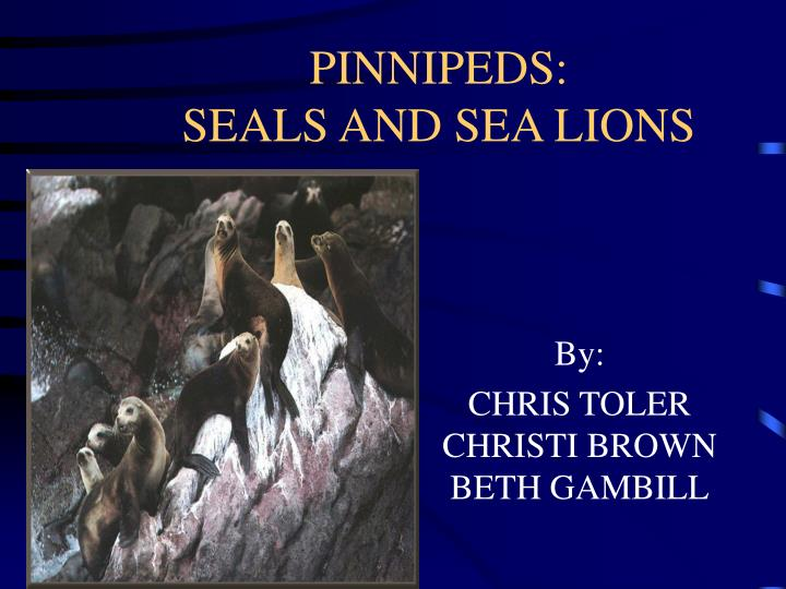 pinnipeds seals and sea lions n.