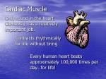 cardiac muscle7