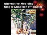 alternative medicine ginger zingiber officinale