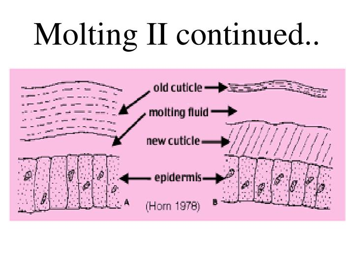 Molting II continued..