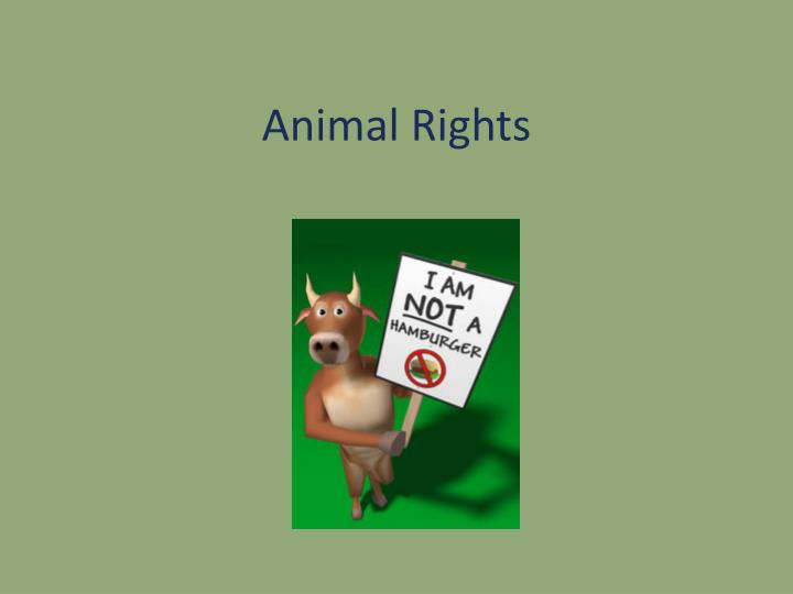 animal rights n.