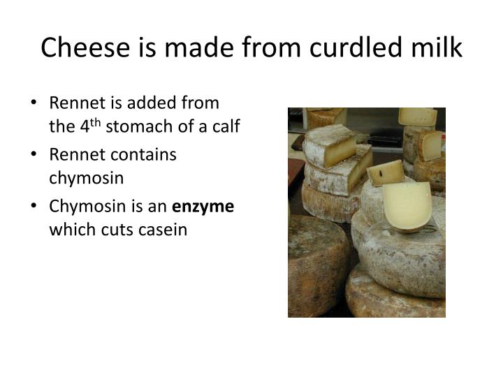 Cheese is made from curdled milk