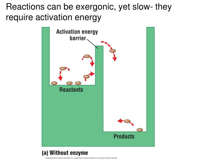 Reactions can be exergonic, yet slow- they require activation energy