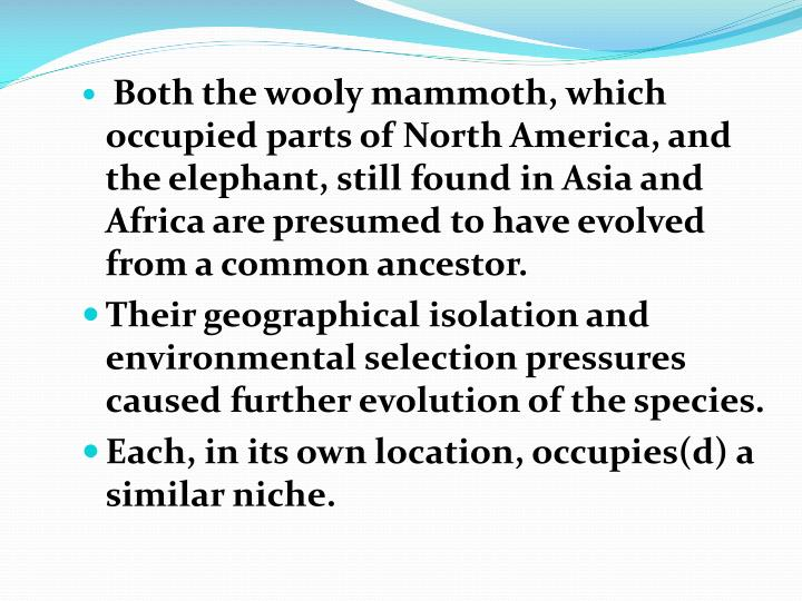 Both the wooly mammoth, which occupied parts of North America, and the elephant, still found in Asia and Africa are presumed to have evolved from a common ancestor.