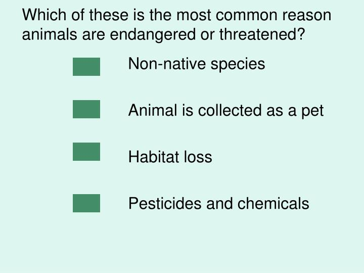 Which of these is the most common reason animals are endangered or threatened?