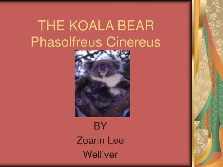 the koala bear phasolfreus cinereus n.