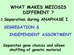 what makes meiosis different23