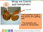 wings are colorful and hydrophobic
