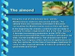 the almond