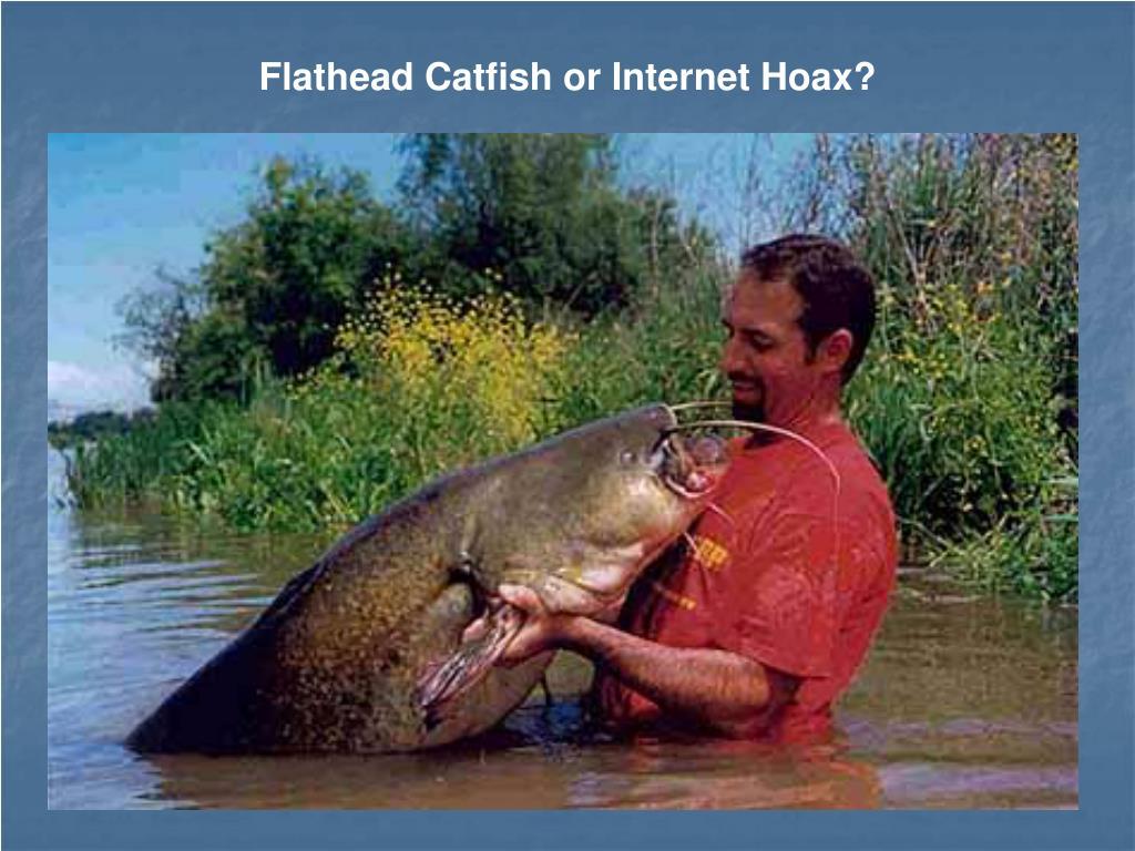 Flathead Catfish or Internet Hoax?