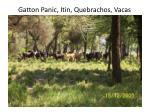 gatton panic itin quebrachos vacas